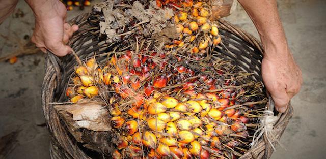 Parceria para óleo de palma
